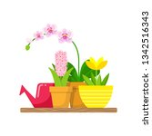 shelf with home plants and a... | Shutterstock .eps vector #1342516343