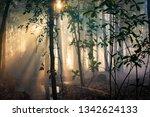 sunbeams pour through a jungle... | Shutterstock . vector #1342624133