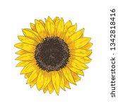 elegant natural realistic... | Shutterstock .eps vector #1342818416