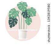 monstera in a flower pot.... | Shutterstock .eps vector #1342819580