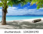 green tree on a white sand... | Shutterstock . vector #134284190