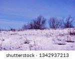 line of  trees along hill ... | Shutterstock . vector #1342937213