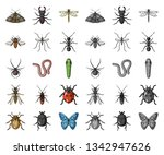 different kinds of insects... | Shutterstock .eps vector #1342947626