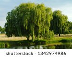 weeping willow tree near a pond ... | Shutterstock . vector #1342974986