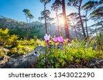 beautiful landscape of a...   Shutterstock . vector #1343022290