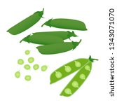 pea pods isolated on a white... | Shutterstock .eps vector #1343071070
