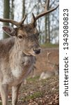 deer head. beautiful animal...   Shutterstock . vector #1343080823