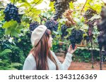 asian woman winemaker checking... | Shutterstock . vector #1343126369