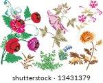 illustration with wild herbs... | Shutterstock . vector #13431379