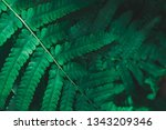 green foliage leaf nature... | Shutterstock . vector #1343209346