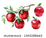 Set Of Red Apples On A Branch....