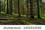 pine woods cut down a tree | Shutterstock . vector #1343314550