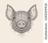 pig illustration  hand drawn... | Shutterstock .eps vector #1343329910