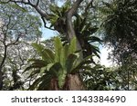 large ferns growing on the... | Shutterstock . vector #1343384690