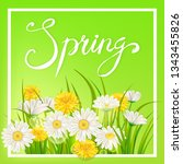 spring daisies  chamomiles... | Shutterstock .eps vector #1343455826