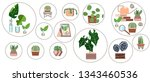 sample icon. home plants.... | Shutterstock .eps vector #1343460536