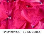 texture background. pattern.... | Shutterstock . vector #1343702066