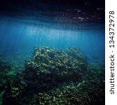 Corals  Sea Floor Under The...