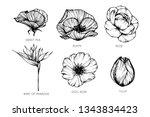 collection set of flower... | Shutterstock .eps vector #1343834423