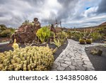 cactuses in the cactus garden ... | Shutterstock . vector #1343850806