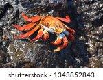 Closeup On Orange Colored Sall...