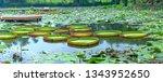 Victoria Amazonica In The Pond...