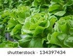 fresh hydroponic vegetables...   Shutterstock . vector #134397434