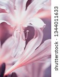 delicate background with... | Shutterstock . vector #1344011633