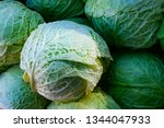 close up of green cabbage in...