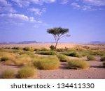 Tree at an oasis between Marib and Seyun at the Arab desert in Yemen - stock photo