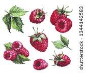 watercolor raspberries red | Shutterstock . vector #1344142583