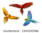 Stock photo set of macaw parrot isolated on white background 1344242486