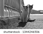Stock photo two light kittens are sitting in the park the shadow of the kitten is displayed 1344246506