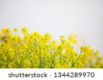 cole flowers background   Shutterstock . vector #1344289970