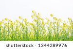 cole flowers background   Shutterstock . vector #1344289976