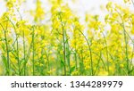 cole flowers background   Shutterstock . vector #1344289979