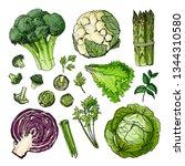 broccoli  cauliflower ... | Shutterstock .eps vector #1344310580