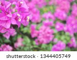 refreshing nature picture used... | Shutterstock . vector #1344405749