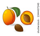 vector hand drawn a whole... | Shutterstock .eps vector #1344437240