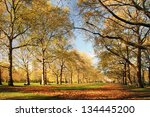 trees in a park  london  england   Shutterstock . vector #134445200