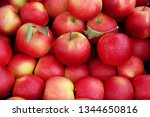 many perfect red apples for... | Shutterstock . vector #1344650816