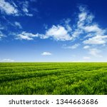 green field and blue sky with... | Shutterstock . vector #1344663686