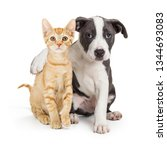 Stock photo friendly puppy with arm around cute kitten isolated on white 1344693083