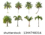 coconut and palm trees isolated ... | Shutterstock . vector #1344748316