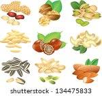 nuts and seeds photo realistic... | Shutterstock .eps vector #134475833