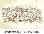vineyard france   hand drawn... | Shutterstock .eps vector #134477183