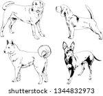 vector drawings sketches...   Shutterstock .eps vector #1344832973
