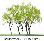 willow on a white background | Shutterstock . vector #134502098