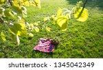 picnic basket with apples and... | Shutterstock . vector #1345042349