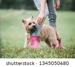 the dog cute funny dog and girl ... | Shutterstock . vector #1345050680